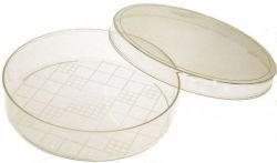 Agtech petridish 9cm wide 10 per pack, gridded